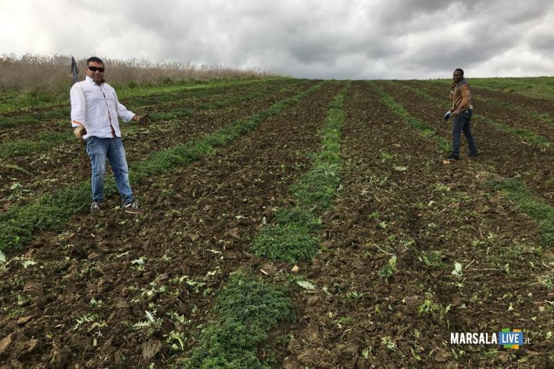 Calatafimi, progetto per la coltivazione di erbe aromatiche (1)