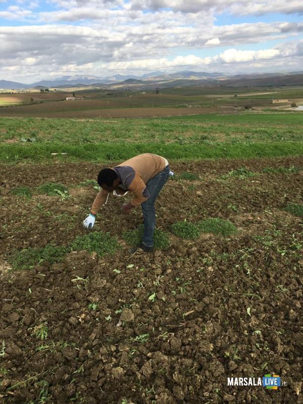 Calatafimi, progetto per la coltivazione di erbe aromatiche (4)