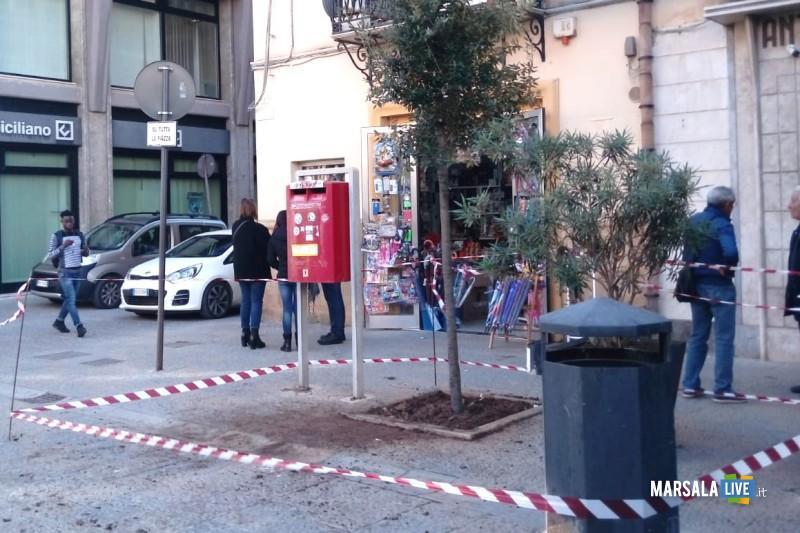 alberi in via roma (1)