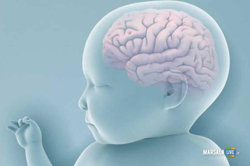 cervello-neonato