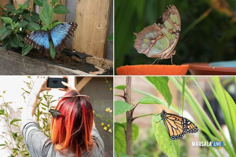 La Casa delle Farfalle a Palermo (1)