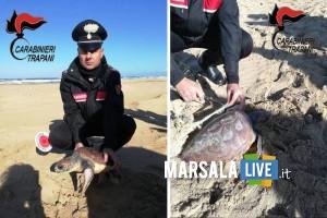 salvataggio tartaruga Trapani - carabinieri