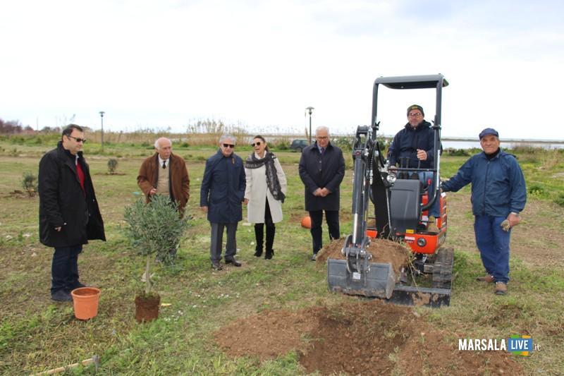 alberi ulivo a Salinella, Marsala (1)
