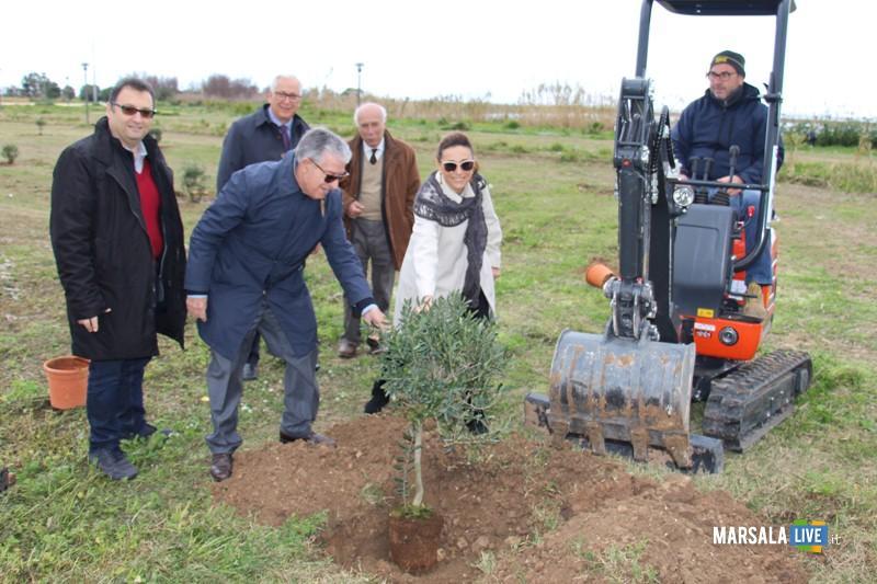 alberi ulivo a Salinella, Marsala (2)