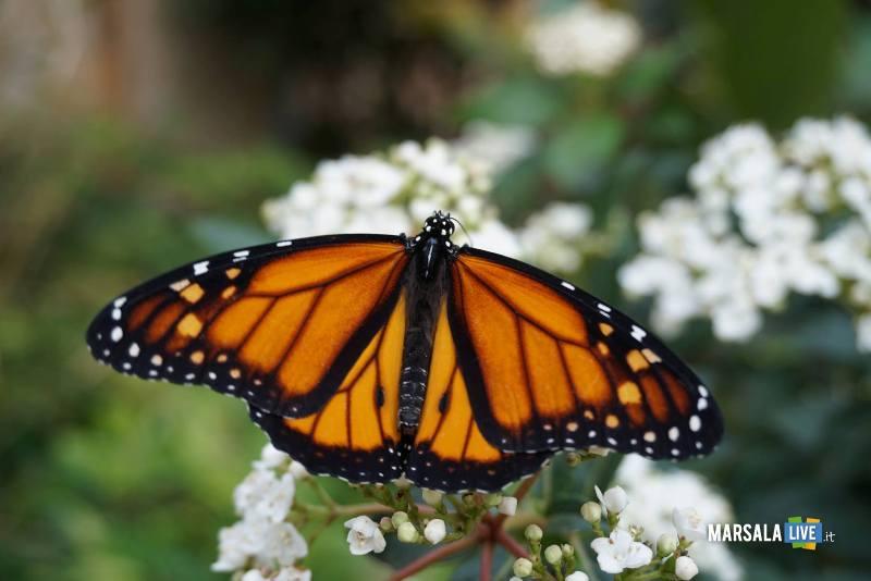 casa farfalle - palermo