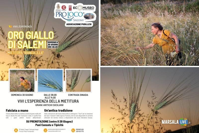 L_Oro giallo di Salemi, antica mietitura grano Biancolilla