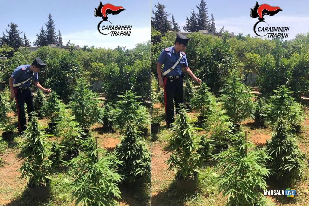 Marsala, scoperta piantagione di marijuana
