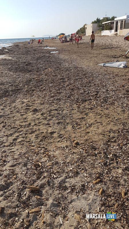 spiagge sporche a marsala (2)