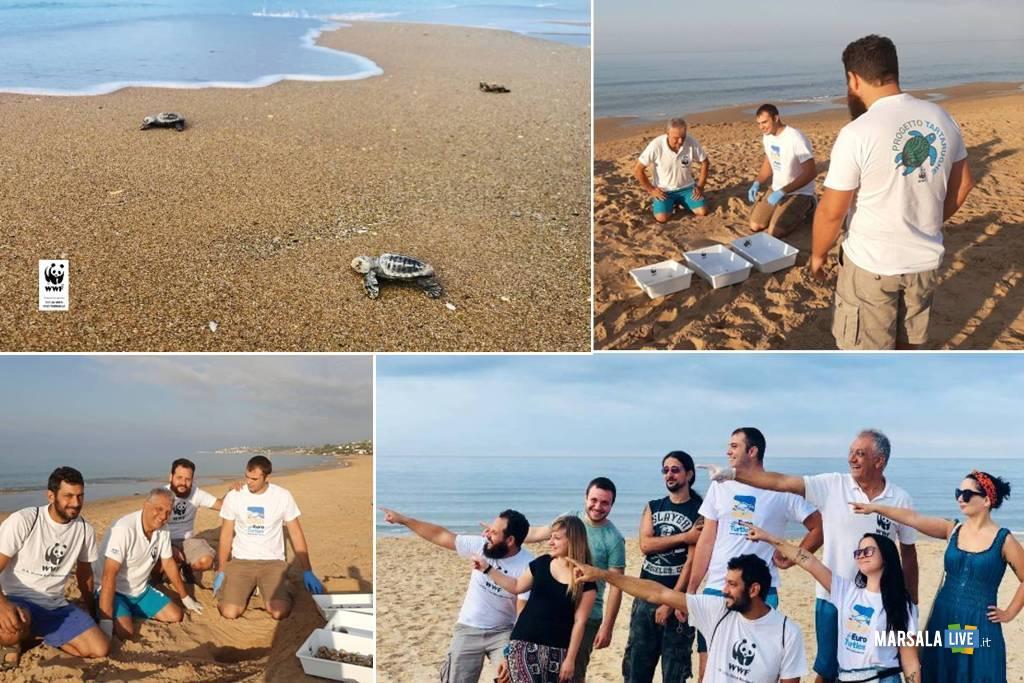 82 piccole di tartaruga marina a Menf