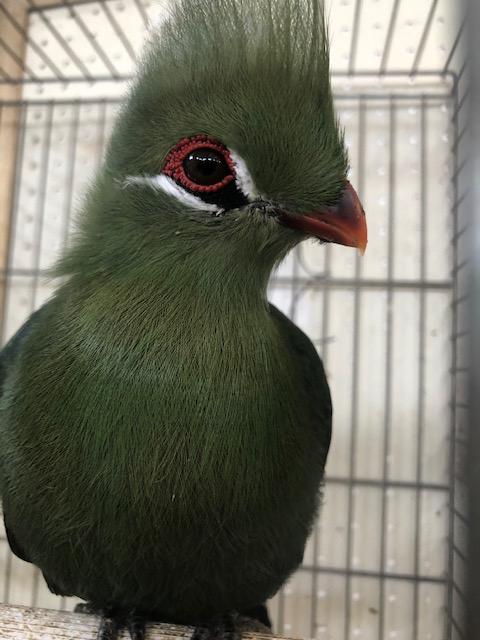 Marsala, Csr-Aias, mostra ornitologica (1)