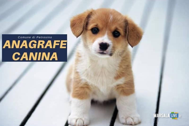 anagrafe canina, comune petrosino
