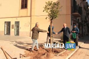 Marsala - FESTA ALBERO