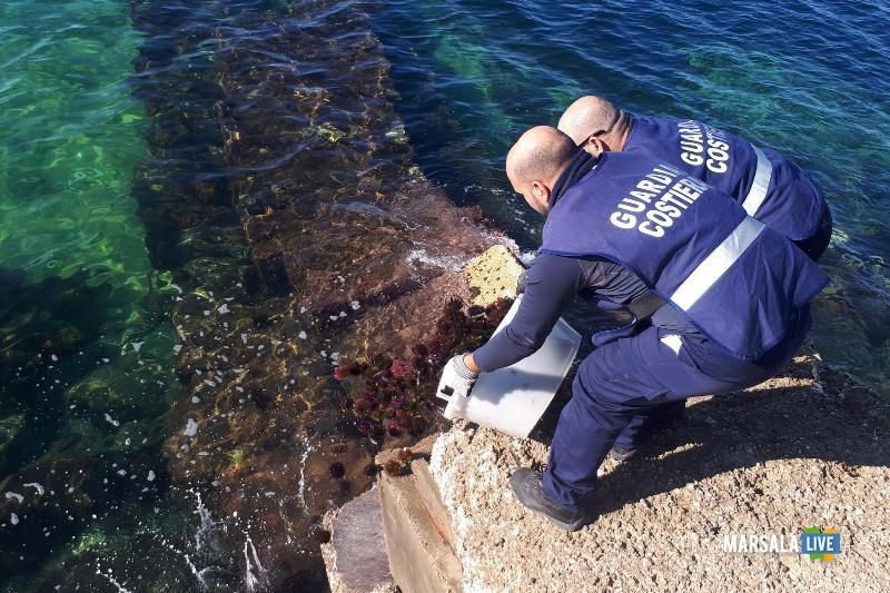 sequestro ricci di mare (1)