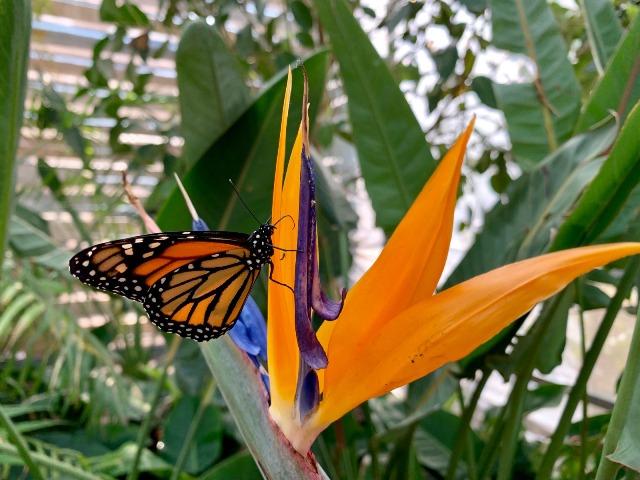 casa farfalle marsala 03