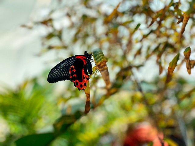 casa farfalle marsala 09
