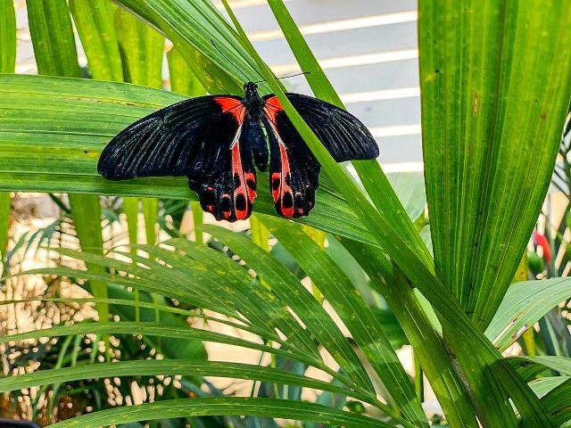 casa farfalle marsala 10