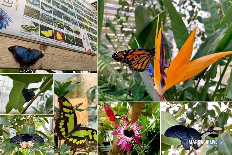 la casa delle farfalle marsala 2020