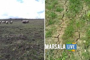 siccità agricoltura sicilia trapani
