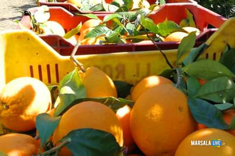 arance, sicilia